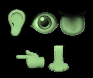 hearseetastetouchsmell_green
